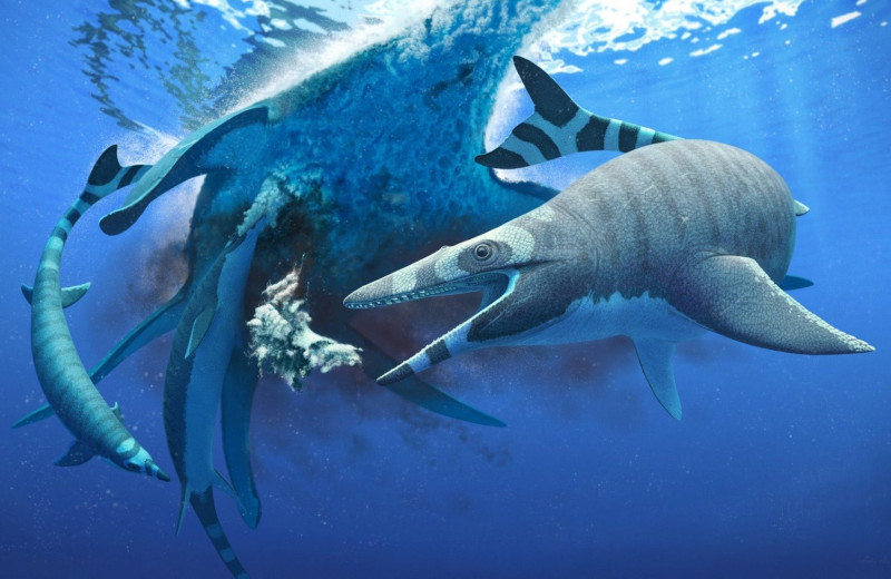 У древних морских ящериц были зубы, как у акул