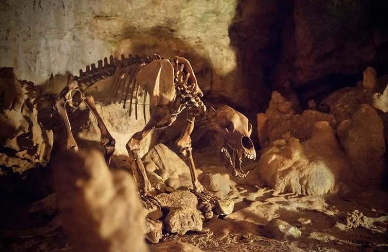 Почему вымерли пещерные медведи?