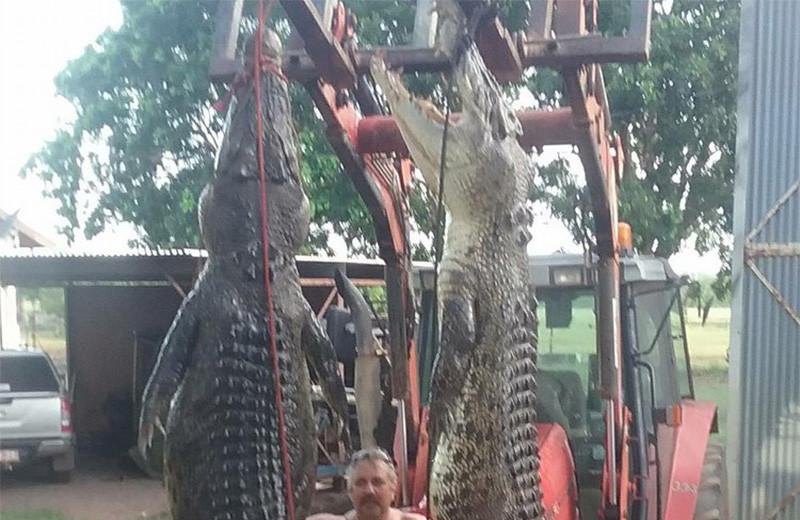 Крокодилы в Австралии: прямая и явная угроза