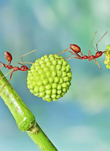 Законы муравейника: как муравьи научились оперировать абстрактными понятиями и выбирать профессию