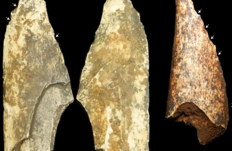 В ЮАР обнаружили костяное орудие парантропа древностью более миллиона лет