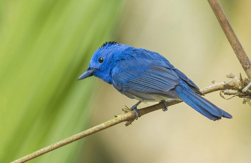 Почему синий — самый яркий структурный цвет в природе