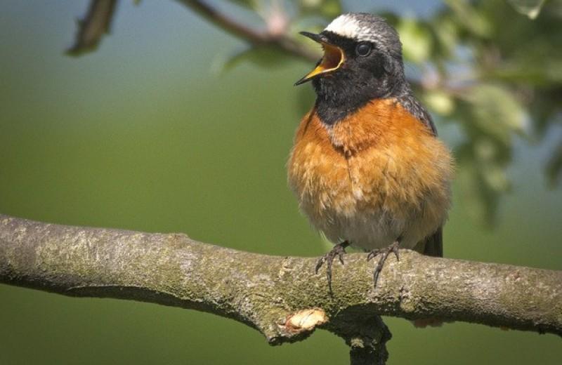 Европейские перелетные птицы скорректировали сроки миграции из-за погоды