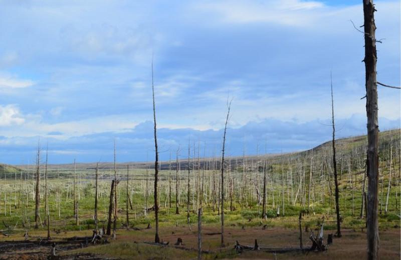 Масштабы загрязнения Арктики больше, чем предполагали ученые