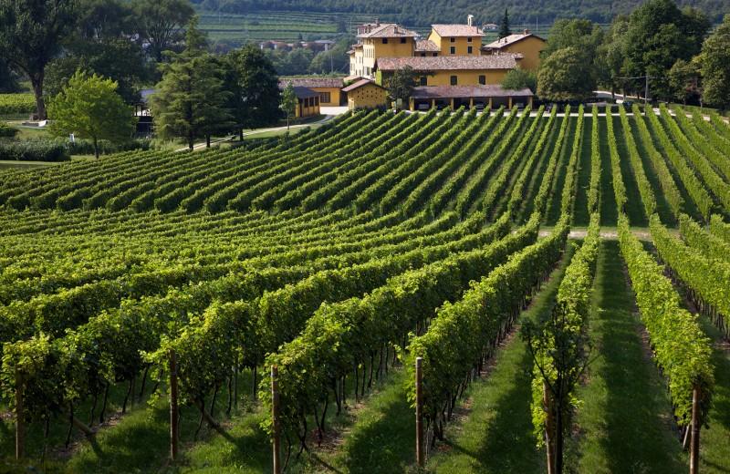Как лондонские финансисты создали вино лучше французского