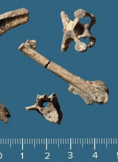 Кости животных указали на круглогодичное заселение датского острова в эпоху мезолита
