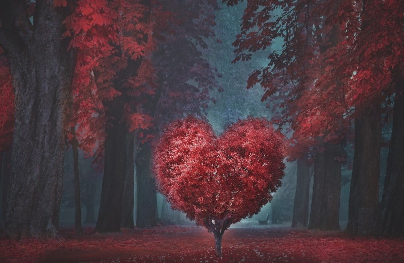 Ритм сердца: что такое аритмия, и как ее распознать вовремя