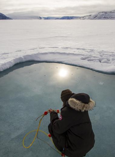 Фитопланктон может цвести под арктическим льдом