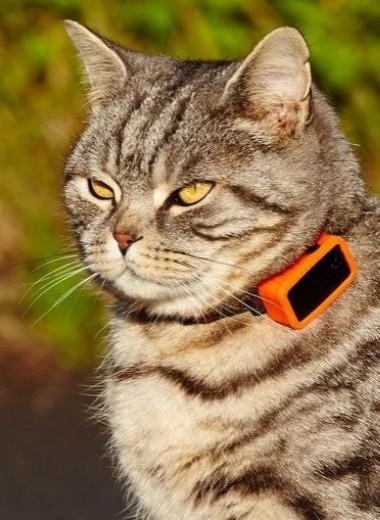 Как не потерять кота, себя и смысл жизни: GPS-трекеры для животных