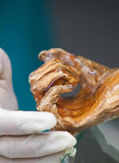 Пещера костей: самая странная археологическая находка