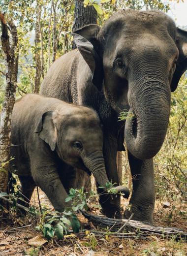 В Индии спасли слоненка, упавшего в 5-метровый колодец: видео