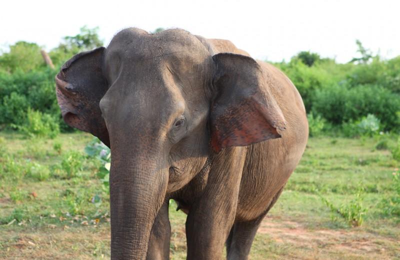Слониха отомстила жестоким людям за своего детеныша: видео