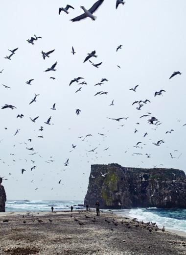 Морской биолог — о том, чему нас должно научить ЧП на Камчатке