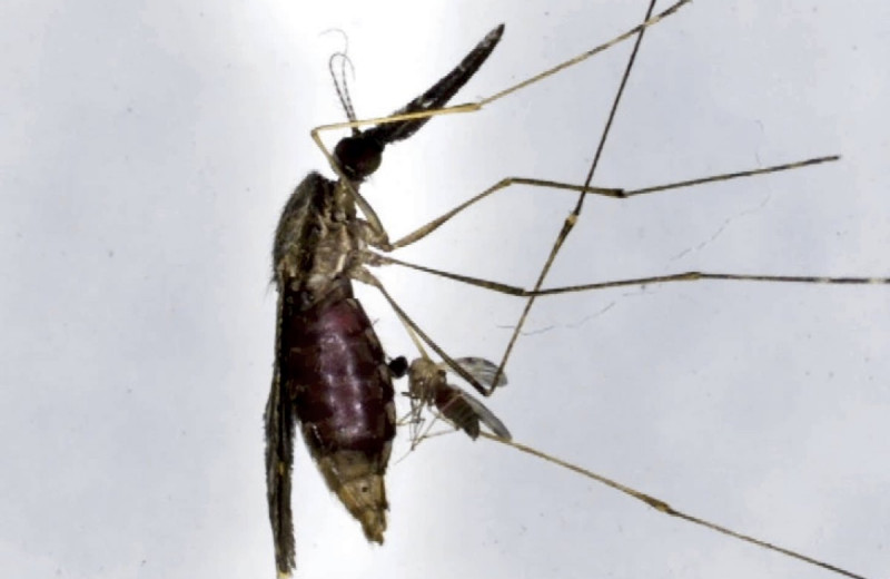 Паразиты паразитов