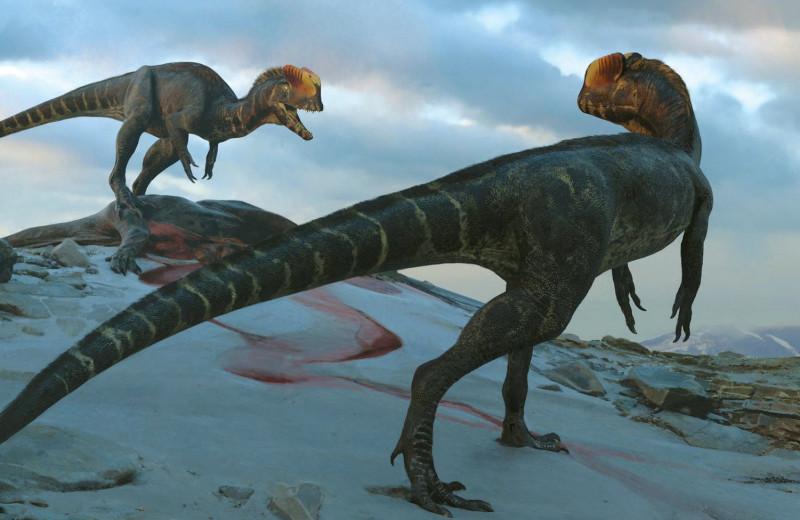 Динозавр из «Парка Юрского периода» оказался гораздо больше своей кинематографической версии