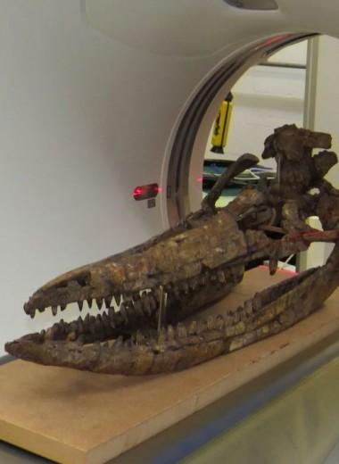 Череп ихтиозавра возрастом 200 миллионов лет воссоздан в 3D
