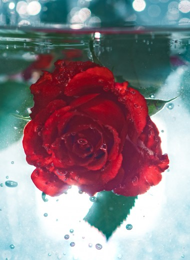 Для кожи, глаз и горла: зачем нужен гидролат розы и как сделать его дома