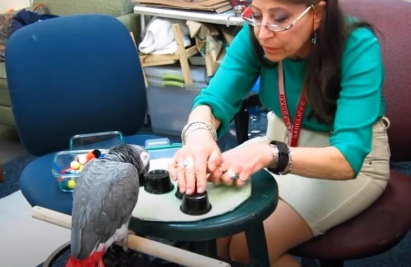 Попугай выполнил тест на зрительную память на уровне студентов Гарварда