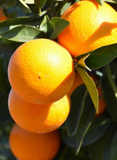 Барон апельсин и его родня