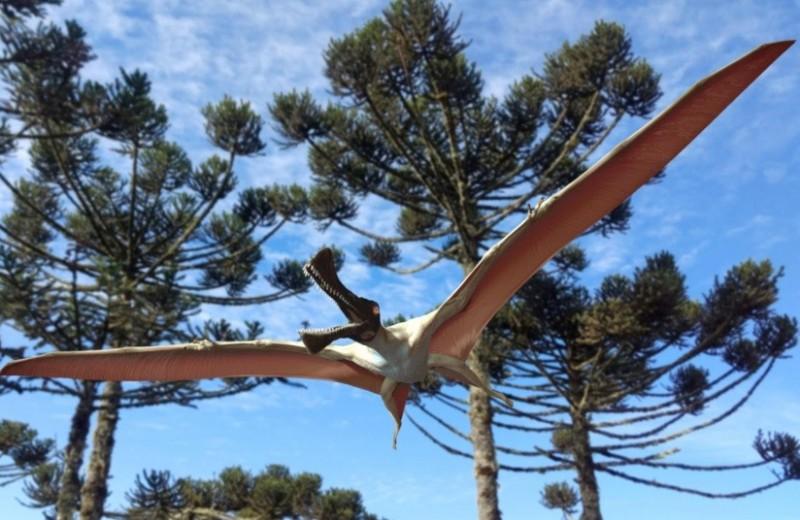 «Железный дракон»: в Австралии нашли новый вид птерозавра