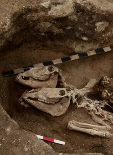 В северном Казахстане обнаружили следы ранней верховой езды Бронзового века
