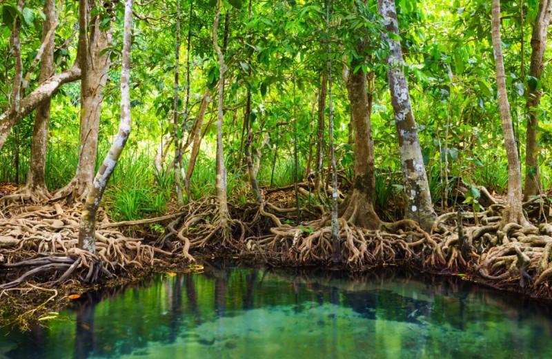 «Зеленый» фильтр из синтетической древесины очищает воду так же, как тропические растения