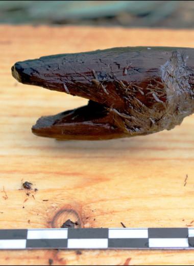 Финские археологи нашли деревянную змею времен позднего неолита