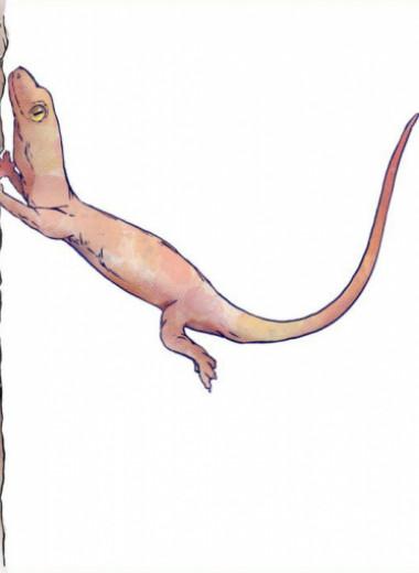 Как геккону пятая нога: ловкие навыки цепкопалых ящериц