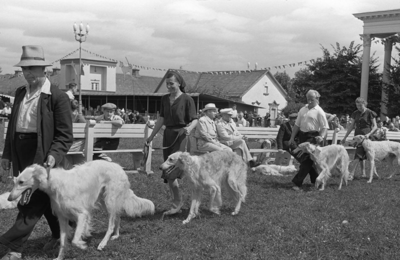 Когда в России прошла первая собачья выставка?