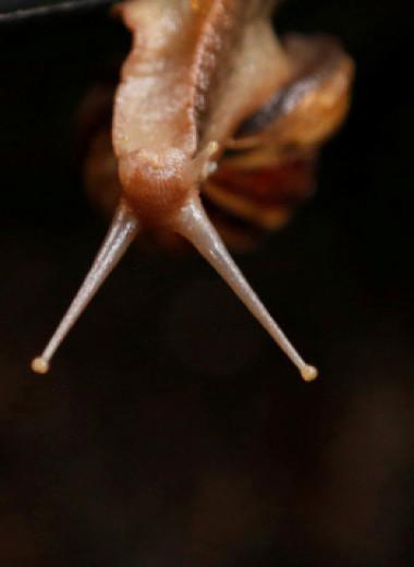 Чувствует ли улитка боль: почему наше восприятие других живых существ так ограничено