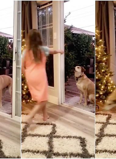 Дверь, которой нет: привычку собаки сняли на видео