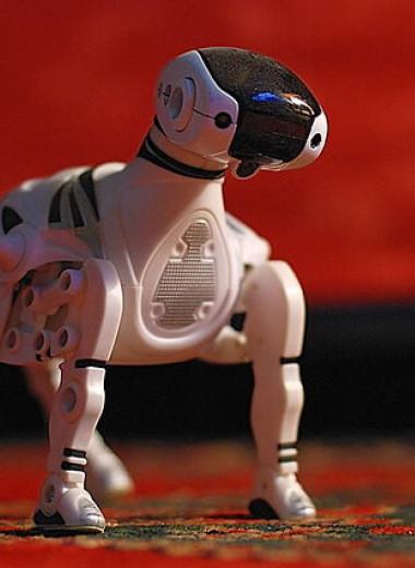 Смогут ли роботы заменить домашних животных