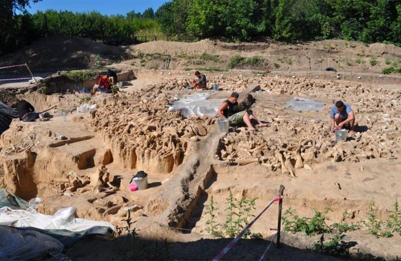 В Воронежской области обнаружили огромную хижину из костей мамонта