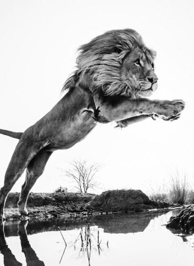«Встречи с дикой природой»: в Москве проходит фотовыставка Дэвида Ярроу