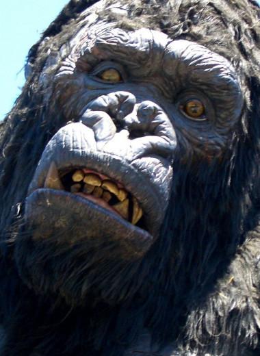 Кинг-Конг: как обезьяна произошла от человека