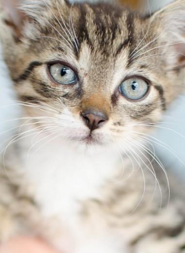 Девушку парализовало из-за заботы о бездомной кошке