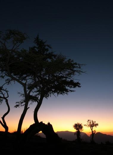 Горы, ладан и пираты: как Оман стал интересным туристическим направлением