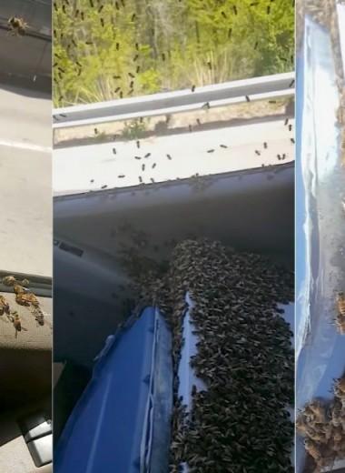Как проехать 65 км с тысячами пчел в машине: видео