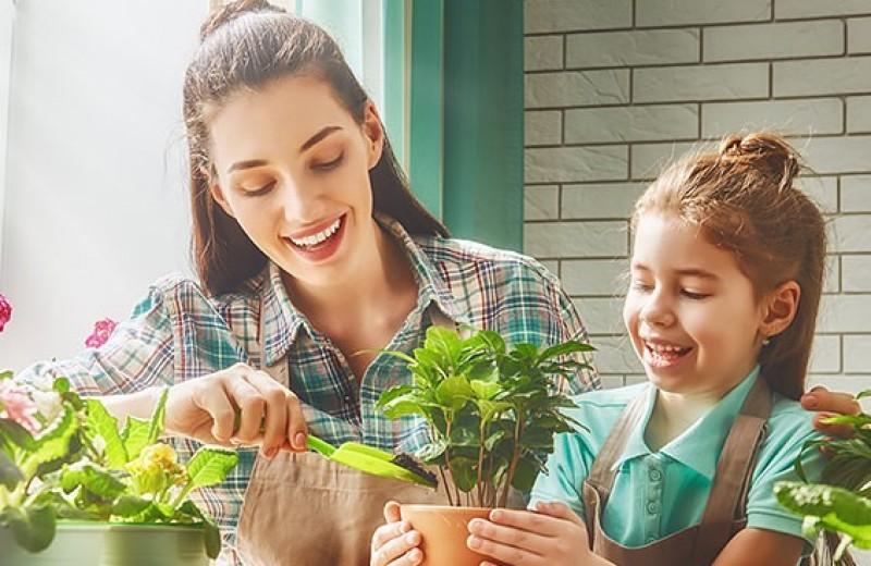 Сам себе садовод: как вырастить домашний цветок
