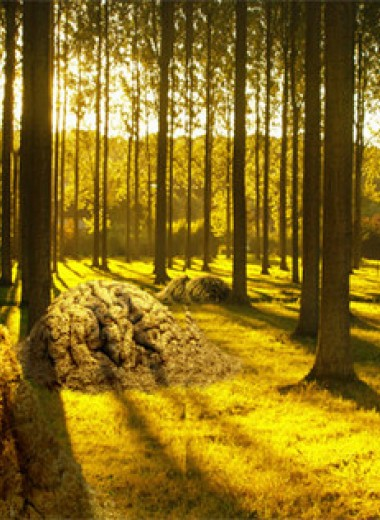 Муравечество. Как мелкие козявки стали влиятельнейшими существами на планете