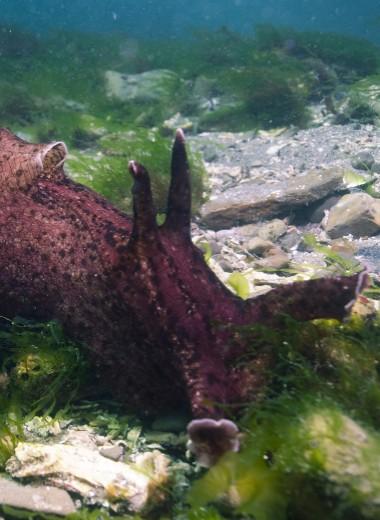 Ученые доказали: морские улитки помогут вылечить болезнь Альцгеймера и достичь бессмертия
