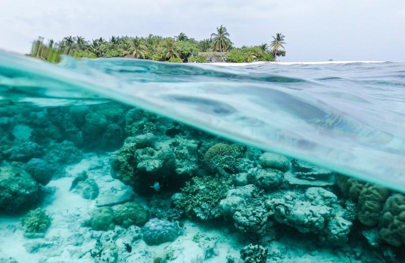 Как потепление воды изменит океан