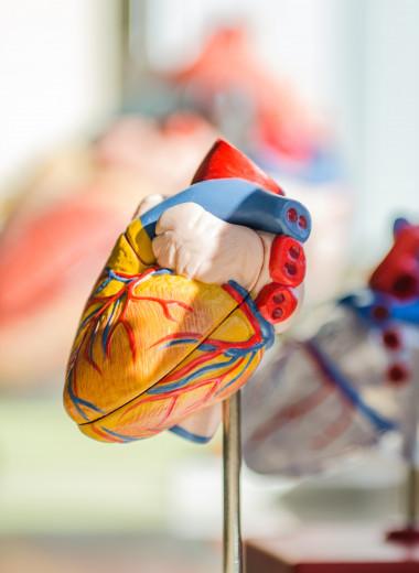Как понять, что вам нужно проверить сердце?