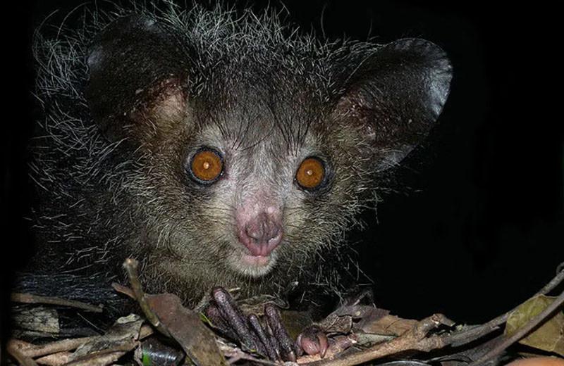 10 самых уродливых животных, находящихся на грани вымирания