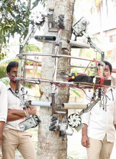 Робот собрал кокосы с пальмы