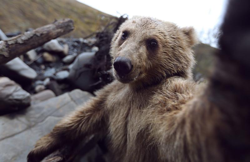 Как фотографировать животных? Правила съемки от Марка Подрабинека