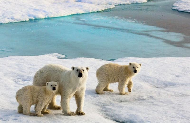 Правда и мифы о глобальном потеплении