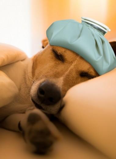 Болит ли у собак голова?