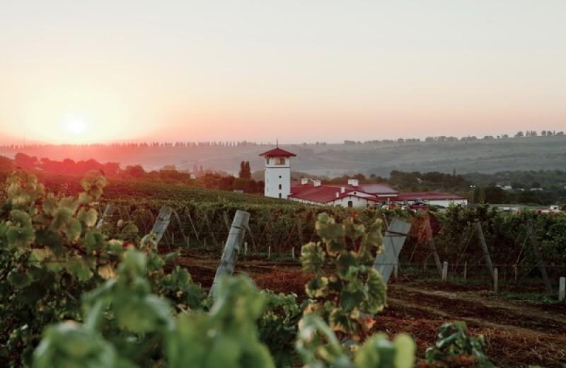 Единственный в своем роде – после 10 лет подготовки проект «Долина Лефкадия» запускает продажу вилл на виноградниках