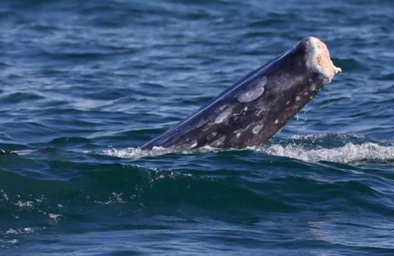 Киты без хвостов: страшные последствия загрязнения океана